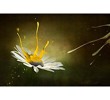 Painting Daisy Photographic Print