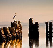 SALTON SEA LANDSCAPE by PhotOptions