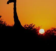 Giraffe silhouette 2 by PBreedveld