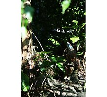Literary Garden Gnome Photographic Print