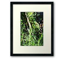 Amongst the Foliage Framed Print