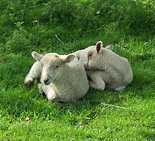 Lambs Sleeping by LoneAngel