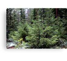 fir-tree Canvas Print