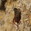 Grasshopper... by jean-louis bouzou