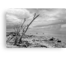 That dead tree holds a clue to the location of the pirate's treasure... Canvas Print