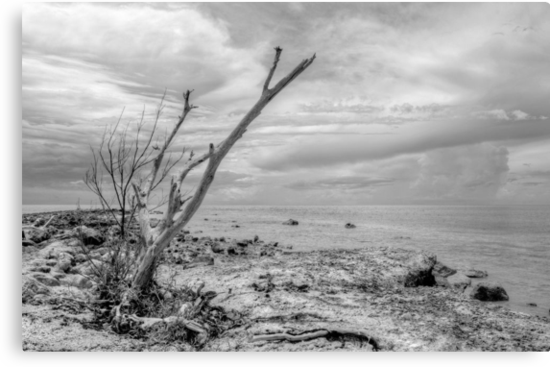 That dead tree holds a clue to the location of the pirate's treasure... by 242Digital