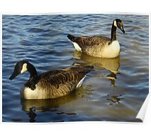 Geese Couple Poster