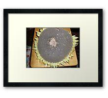 Sunflower Seed Pod Framed Print