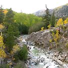 Aspens Turning on Independence Pass by KimSha