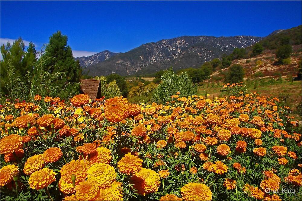 Marigold Landscape by Chet  King