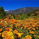 Marigold Landscape by Chet  King