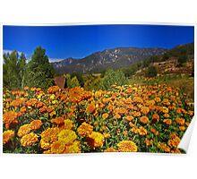Marigold Landscape Poster