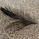 Sandy Black Feather by KimSha