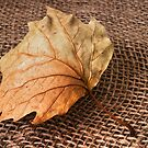 Autumn Leaf by Ellesscee