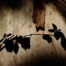 Shadows.. by debsphotos