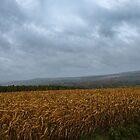 Thirsty ~ A Corn Field in a Rain Storm by Chantal PhotoPix