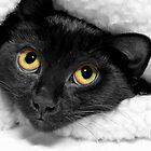 Lucky Kitty by Stacy Brooks Photography