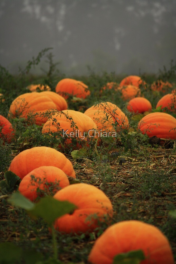 Autumn's Bounty by Kelly Chiara