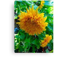 Sunflower Odyssey Canvas Print