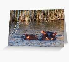 """""""Mother and child"""" - hippo and her calf. Mabula, Northern Province, South Africa. Greeting Card"""