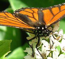 Monarch power by MarianBendeth