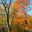 Colors Along The Creekbank by lorilee