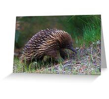 Puggles The Short Beaked Echidna Greeting Card