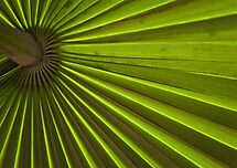 Stripes by Gisele Bedard
