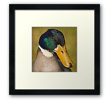 Duck up close Framed Print