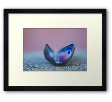 Pink Blue Monarch Framed Print