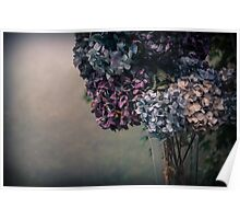 Hydrangea in the Fall Poster