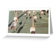 March of the Flamigos Greeting Card
