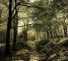 Forest path. by Matthew Trist
