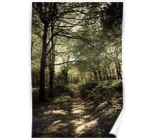 Forest path. Poster