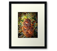 iPhoneography: Old Man Banksia Framed Print