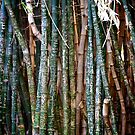 Messages on Bamboo by Debbie-anne
