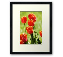 Tulip Top - Red Blaze Framed Print