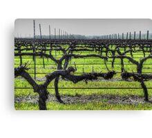 Ferngrove Vineyard Canvas Print