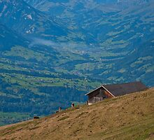 Niederhorn, Swiss Alps by Michael Brewer