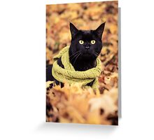 Black Cat in a Scarf Greeting Card