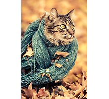 Maine Coon Cat in a Scarf Photographic Print