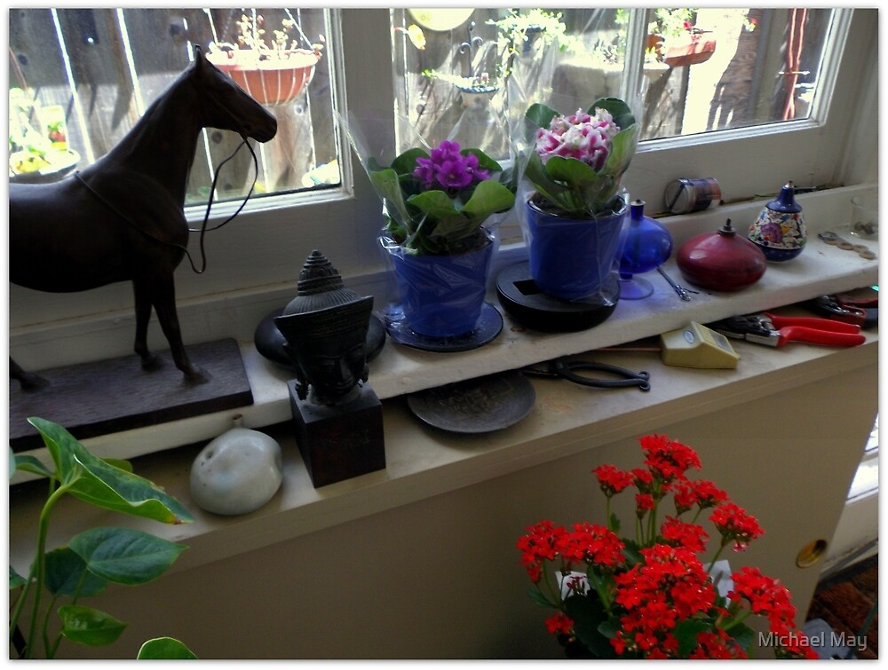 New African Violets In The Potting Shed by Michael May