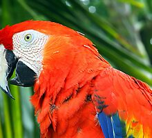 Tropical Scarlet Macaw by Samantha Dean