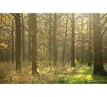 Autumn Softness Photographic Print