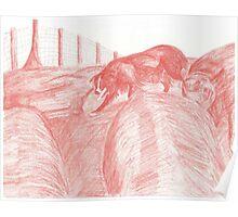 Border Collie Gathering Sheep Poster