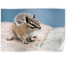 Little chipmunk Poster