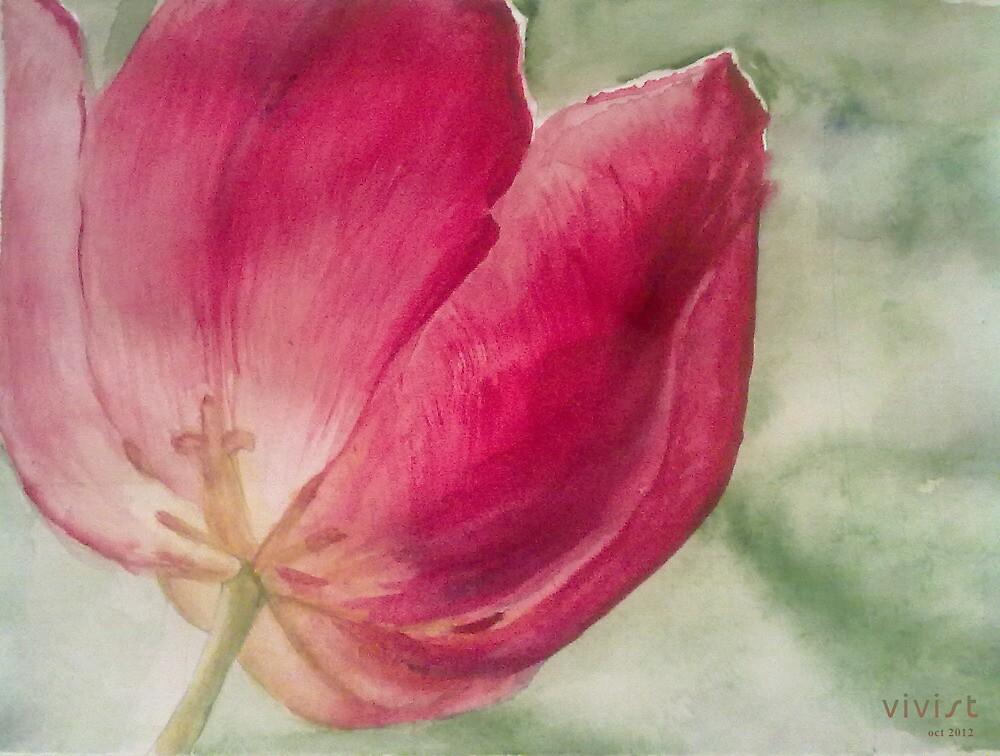 Tulip by Victoria  _Ts