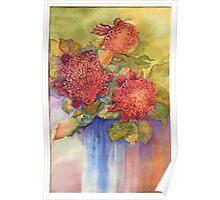 Waratah flowers Poster