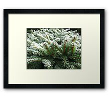 Needles and Frost Framed Print