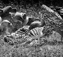 """Le Massacre"" (B&W) by Andreas Koerner"